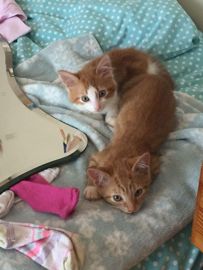 Cute Kittens Cute Cats Kittens Cutest Kittens