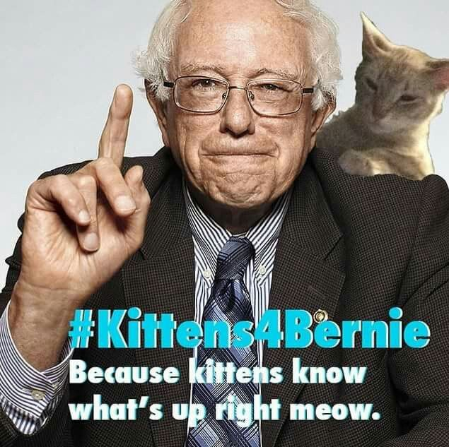 These CATegorically meows (and barks) will cheer up your day!   So much love for Bernie!