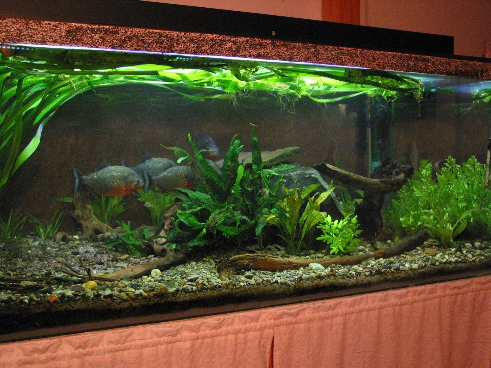 Aquarium.JPG (1600×1200) | Aquarium | Pinterest