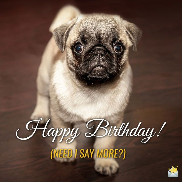 Cute Animals And Funny Happy Birthday Wishes Cute Pug Puppies
