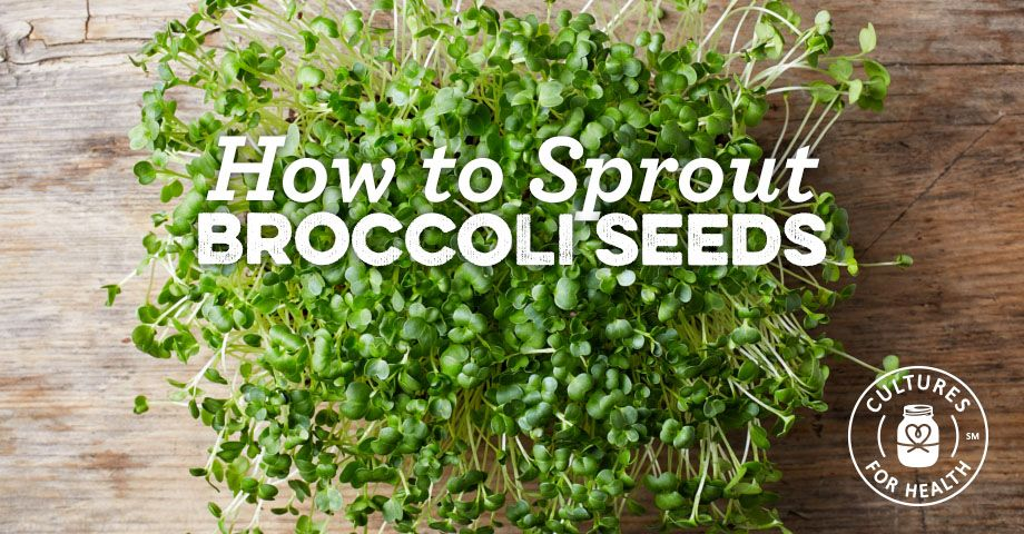 How To Sprout Broccoli And Other Brassica Seeds
