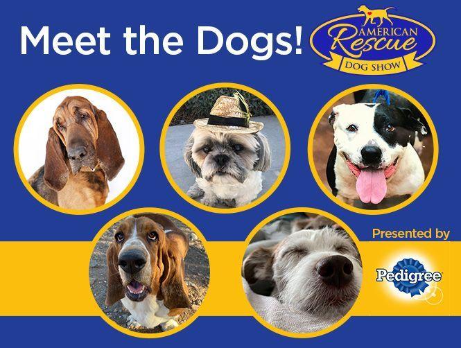 American Rescue Dog Show Hallmark Channel In 2020 American Dog