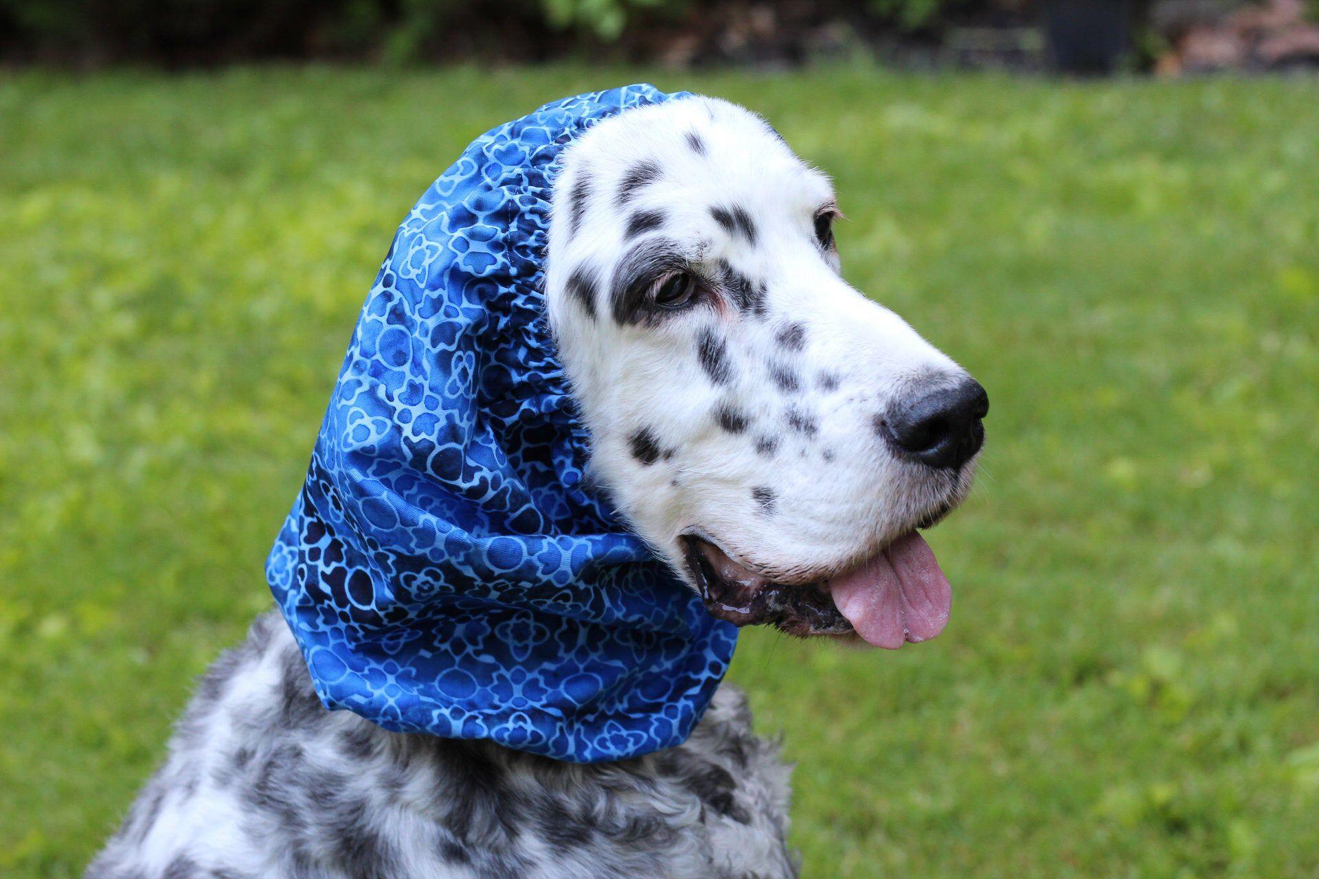 Blue dog snood cotton pet snood cavalier snood cocker