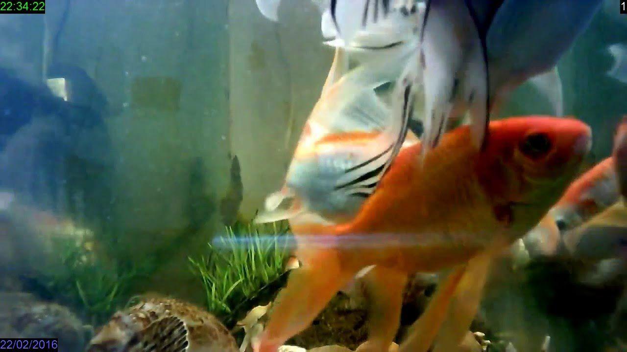 Fish tank hd for desktop full screen flower download hd for Fish tank full movie