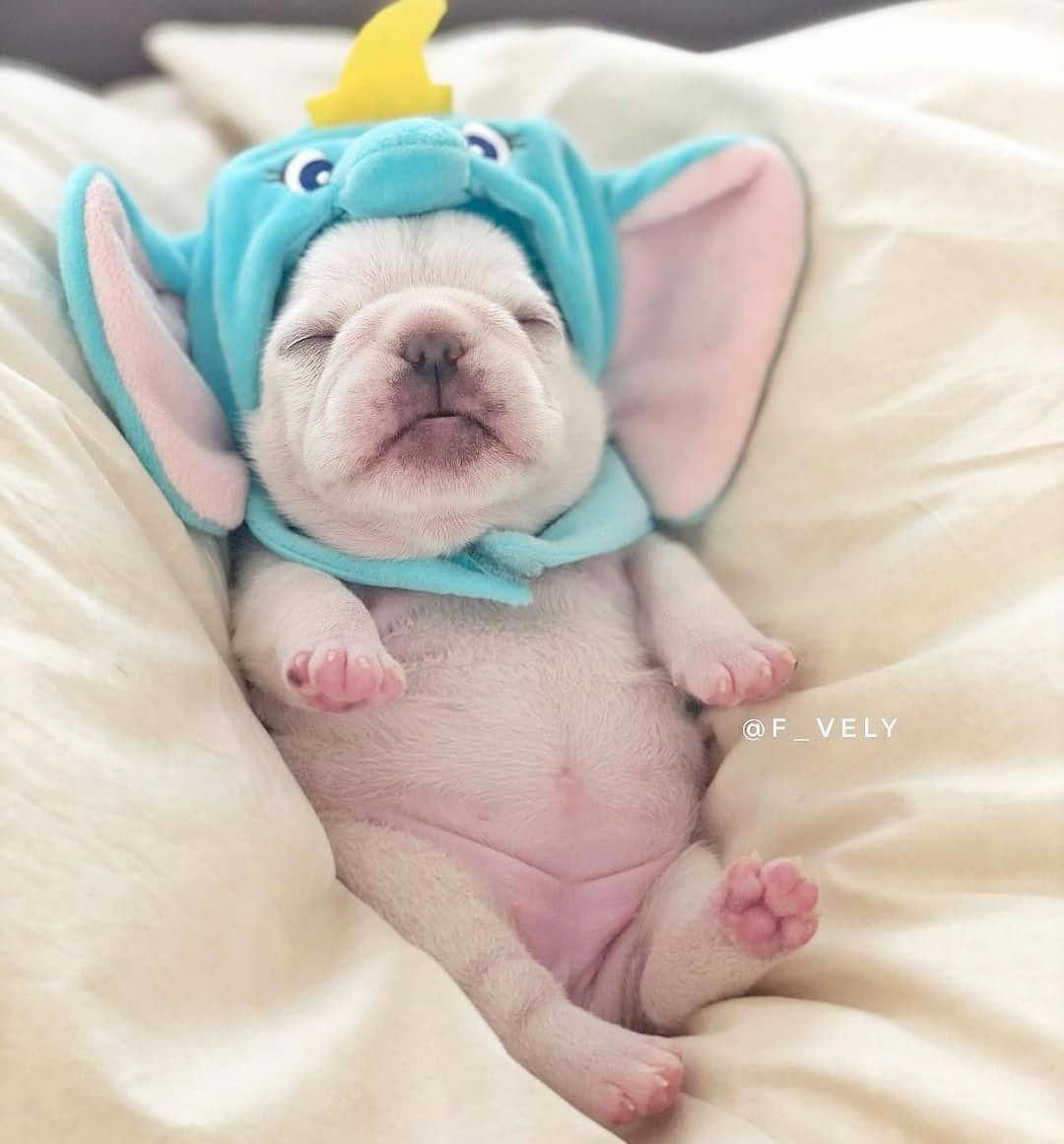 Pin By Andrea Lee On Frenchie Babies Cute Baby Animals Baby
