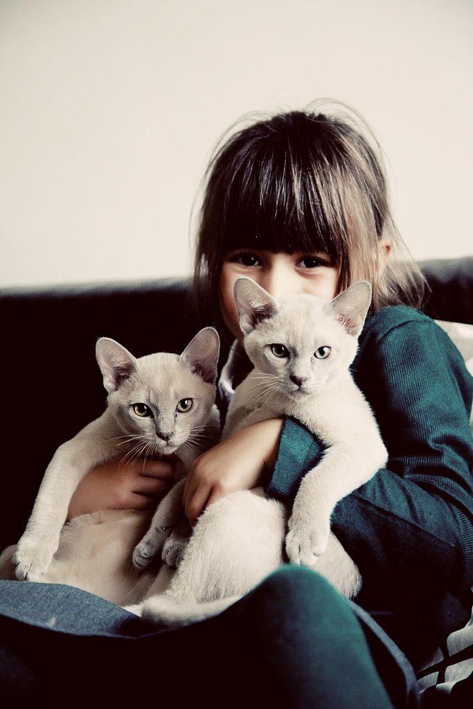 New feline friends