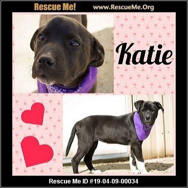 New Jersey American Bulldog Rescue ADOPTIONS Rescue