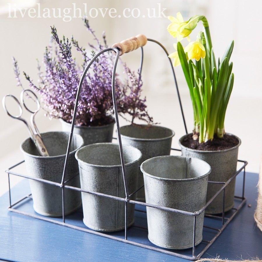 Zinc Pots In Metal Trug Zinc Pots