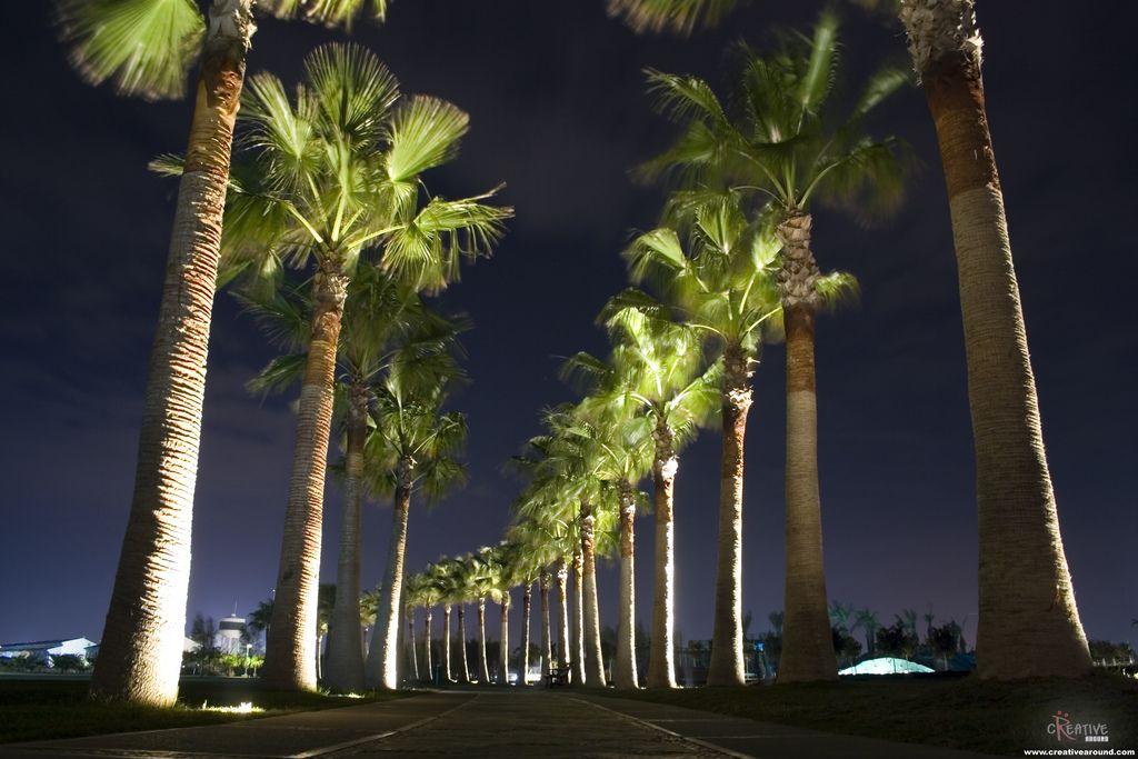 Uplighting Landscape Palm Tree Row Outdoor Tree Lighting Tropical Outdoor Lighting Outdoor Landscape Lighting