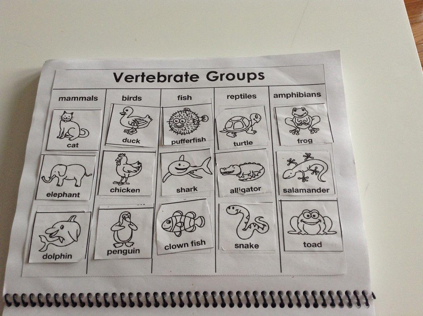 Worksheets Vertebrates And Invertebrates Worksheets pin by lorrie blackard friet on printable worksheets pinterest vertebrates and invertebrates unit study