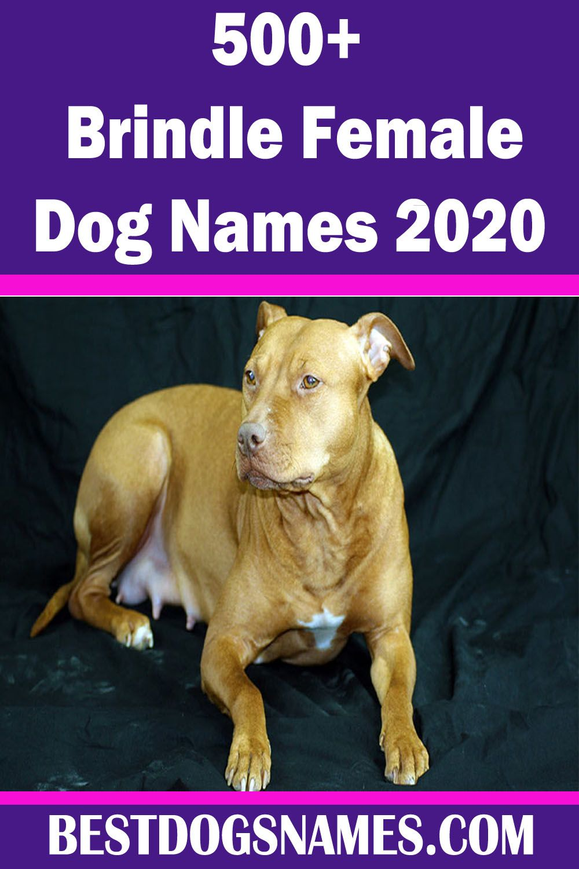 Brindle Female Dog NamesGirl Dog Names in 2020 Girl dog