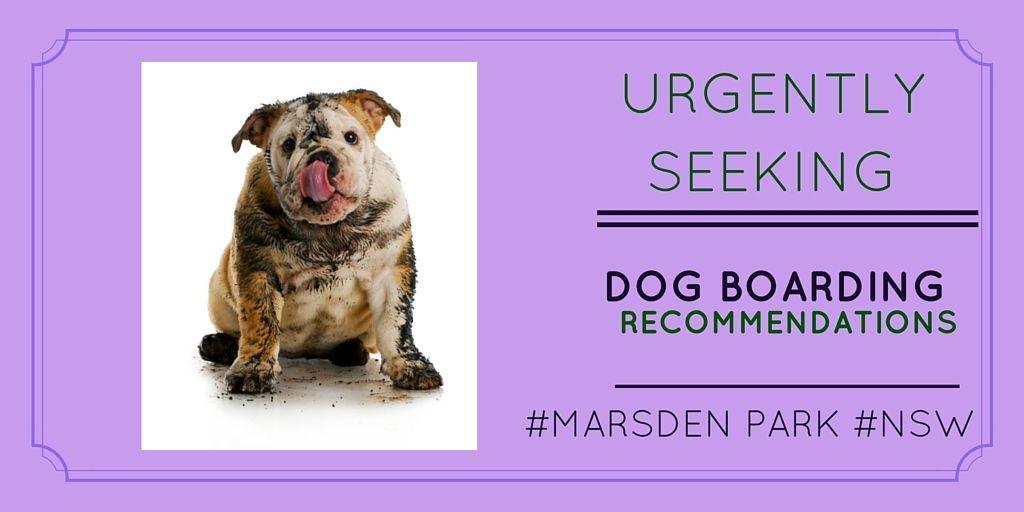 Pin By Petstayadvisor Pty Ltd On Pet Owner Seeking Dog Boarding