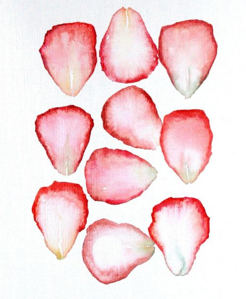 Watercolor Rose Petals Flower Drawing Rose Illustration Roses Drawing