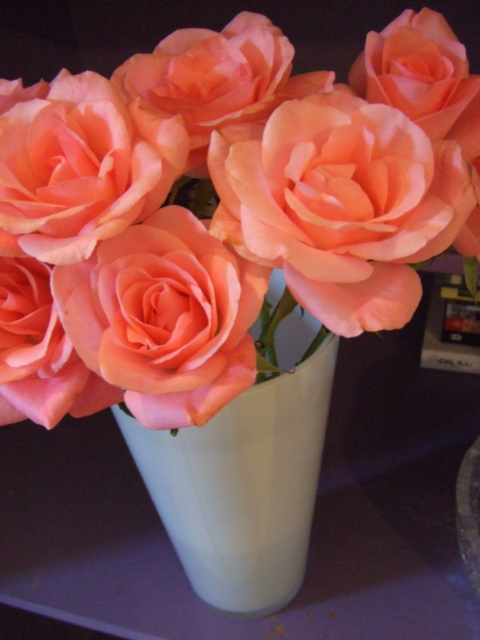 Favorite color rose these and the cold water rose! | Flowers that I ...