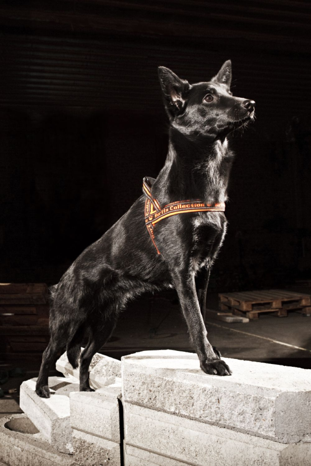 Hurtta Padded Dog Harness Available In Black The Design Of