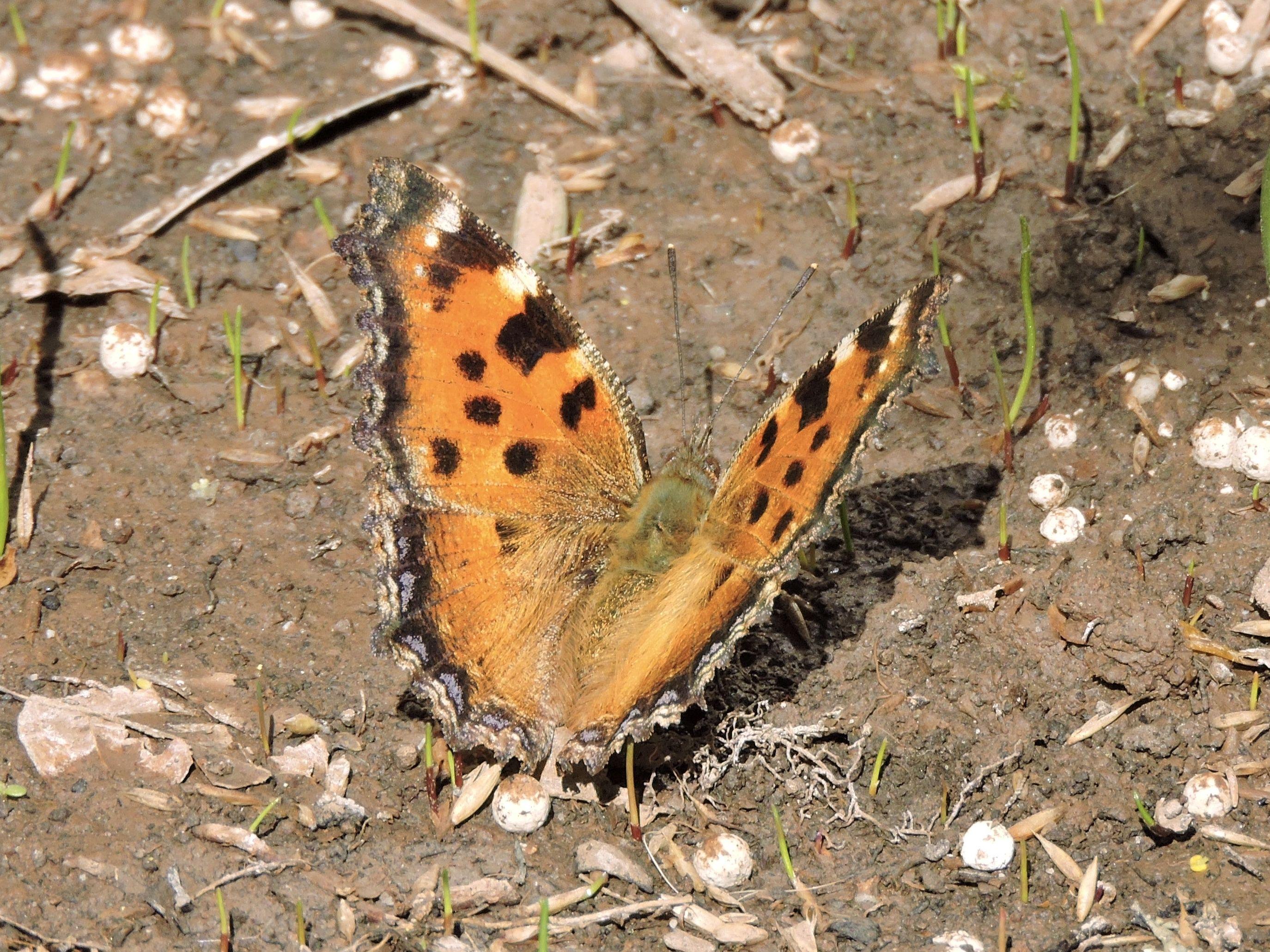 Pin Auf Butterflies