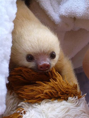 Baby Sloth w/ his Teddy Bear by smcmahon44