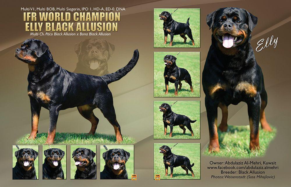Ifr World Champion Multi V1 Multi Bob Multi Siegerin Elly Black