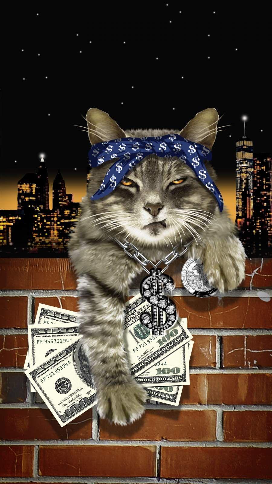 Gangsta Cat Iphone Wallpaper Iphone Wallpaper Cats Iphone Animal Wallpaper