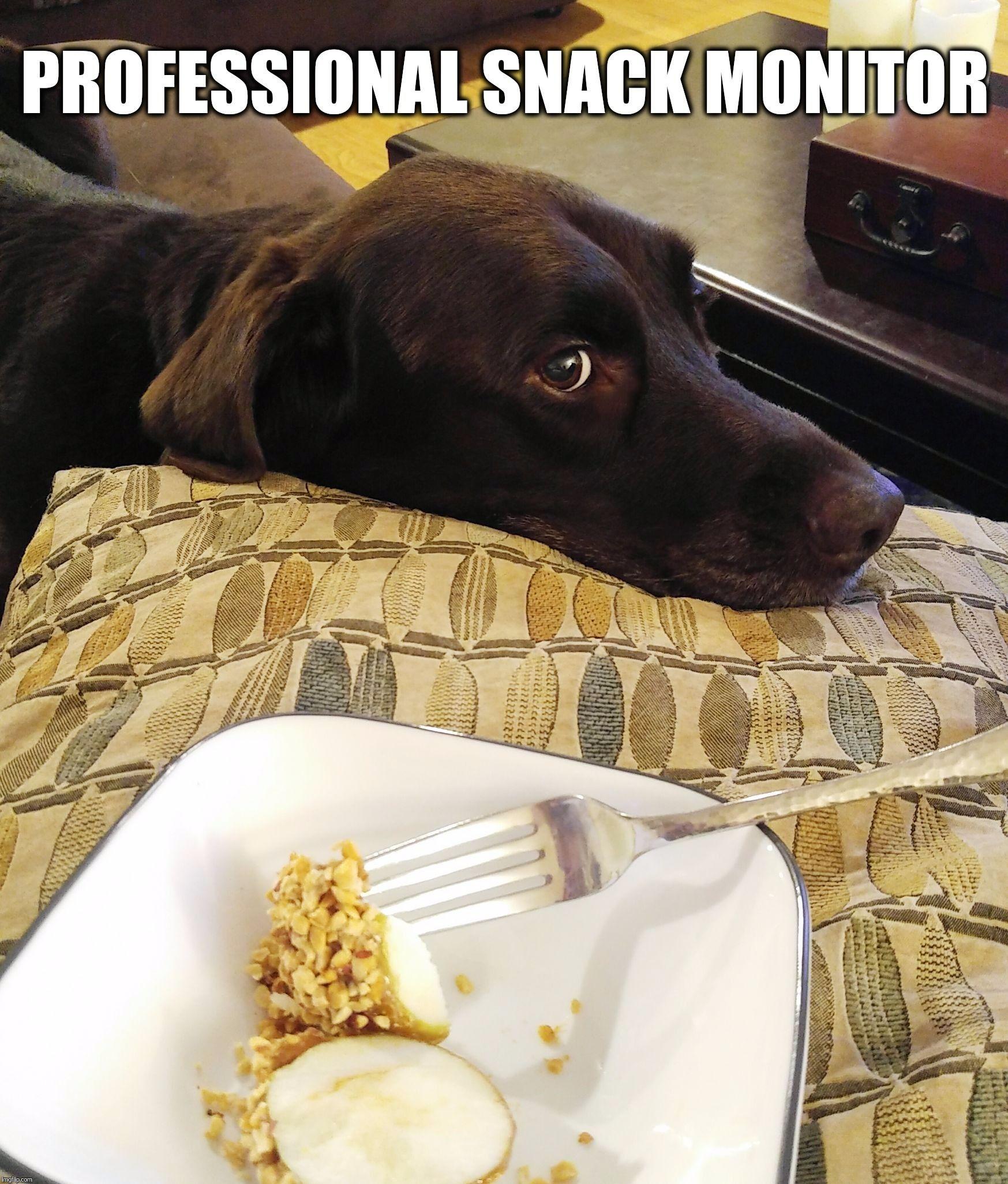 Funny Dog Memes Humor And Quotes Labrador Funny Labrador Chocolate Lab