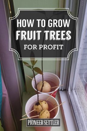 Growing Trees For Profit In Your Backyard