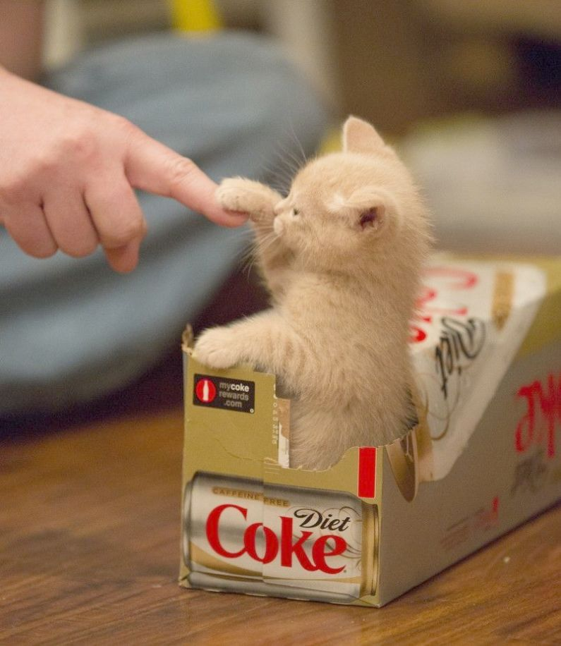 Check It Out Kittens For Sale In Ct Kittens Cutest Cute Animals Cute Baby Animals