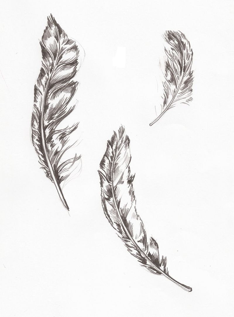 Hand Drawn Feathers Illustration News Events General Stuff Feather Drawing Feather Illustration Feather Tattoo Drawing