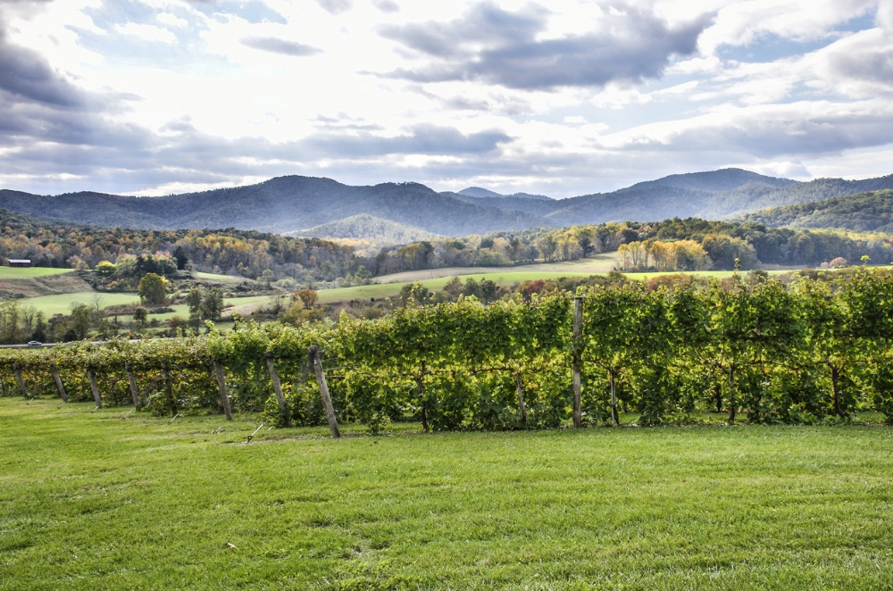 10 Top Virginia Wineries: A Day Trip from Washington D.C