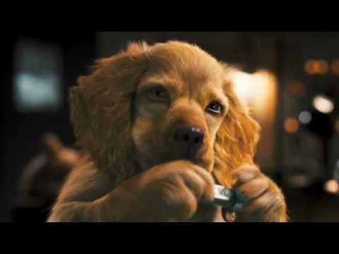 Como Cães e Gatos 2 - Trailer Teaser (dublado)