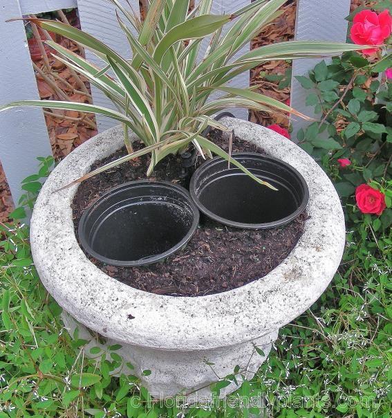 South Florida Tropical Landscape Ideas Planter Container: Florida Gardening Success
