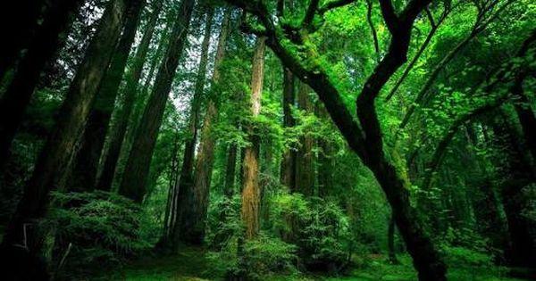 Image Result For High Resolution Tropical Forest Vaporiz