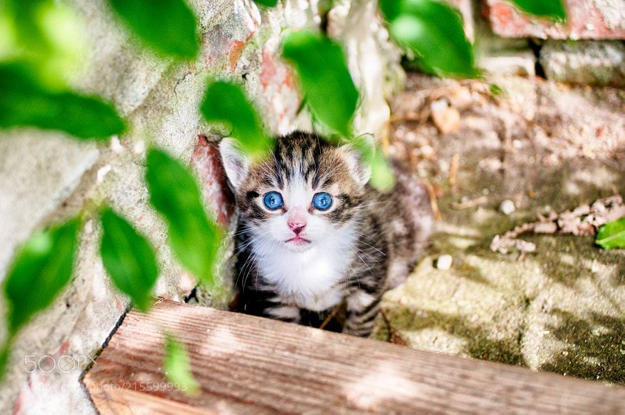 cat1 - kitty1