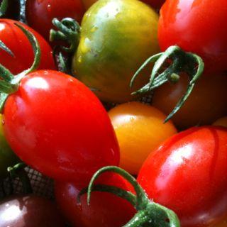 color mini tomatoes.