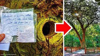 Un árbol en Alemania tiene su propia dirección, y la gente le escribe para pedir ayuda - © COPYRIGHT  -  #Arbol #Alemania #Tiene #Propia #Direccion #Gente #Escribe #Para #Pedir #Ayuda