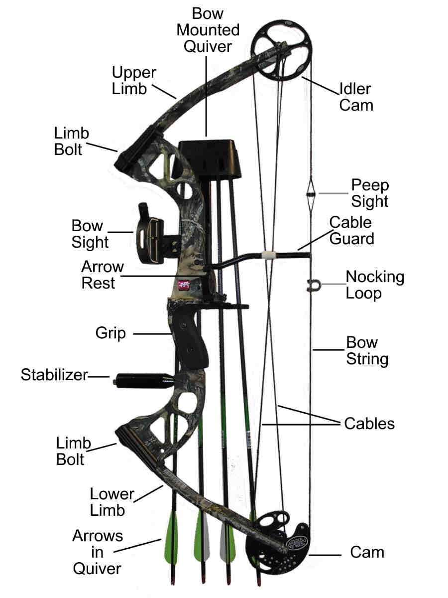 Compound bow and its parts armored up pinterest for Compound bow fishing