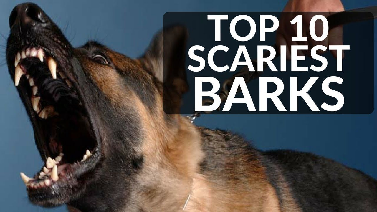 Top 10 Scariest Dog Barks Which Breed Has The Loudest Scariest