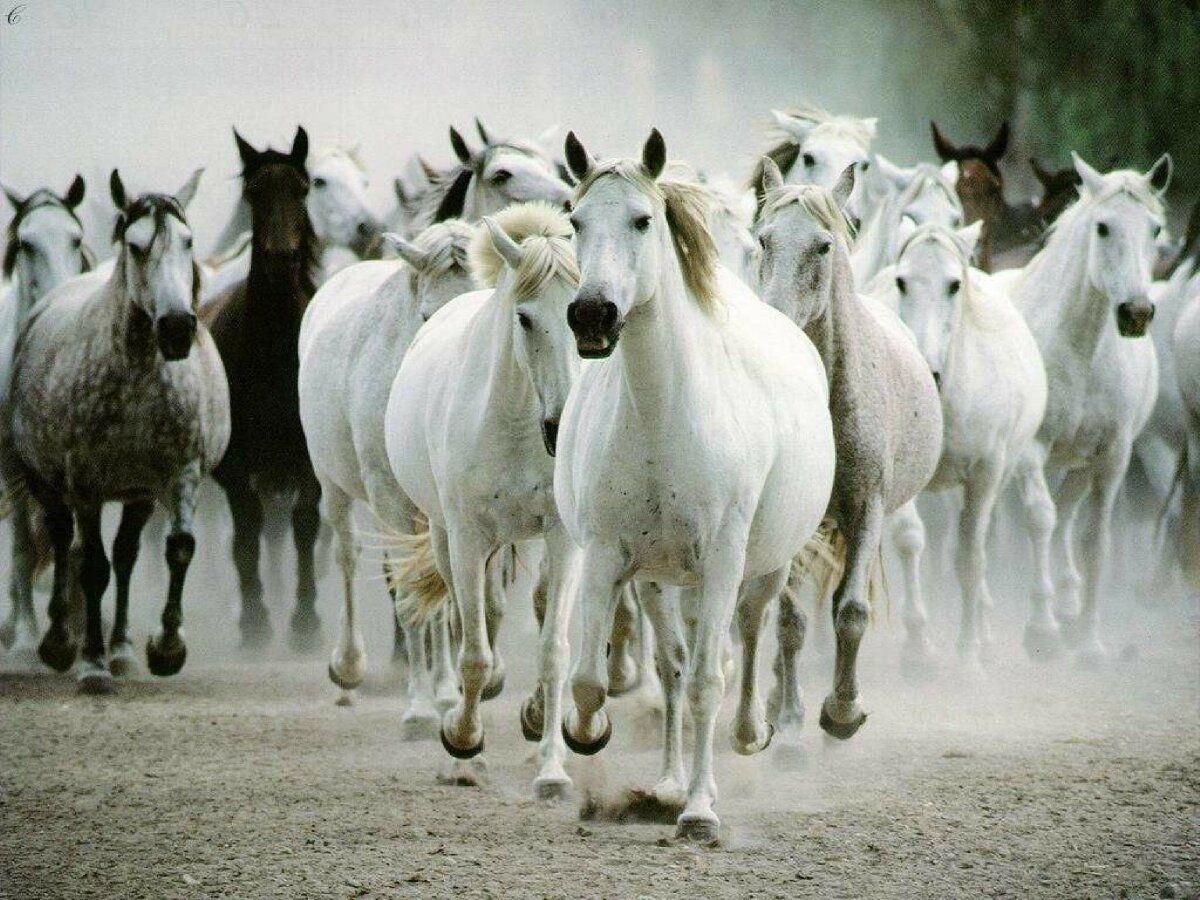 خلفيات خيول أحصنة خيل Horses عالية الدقة 18