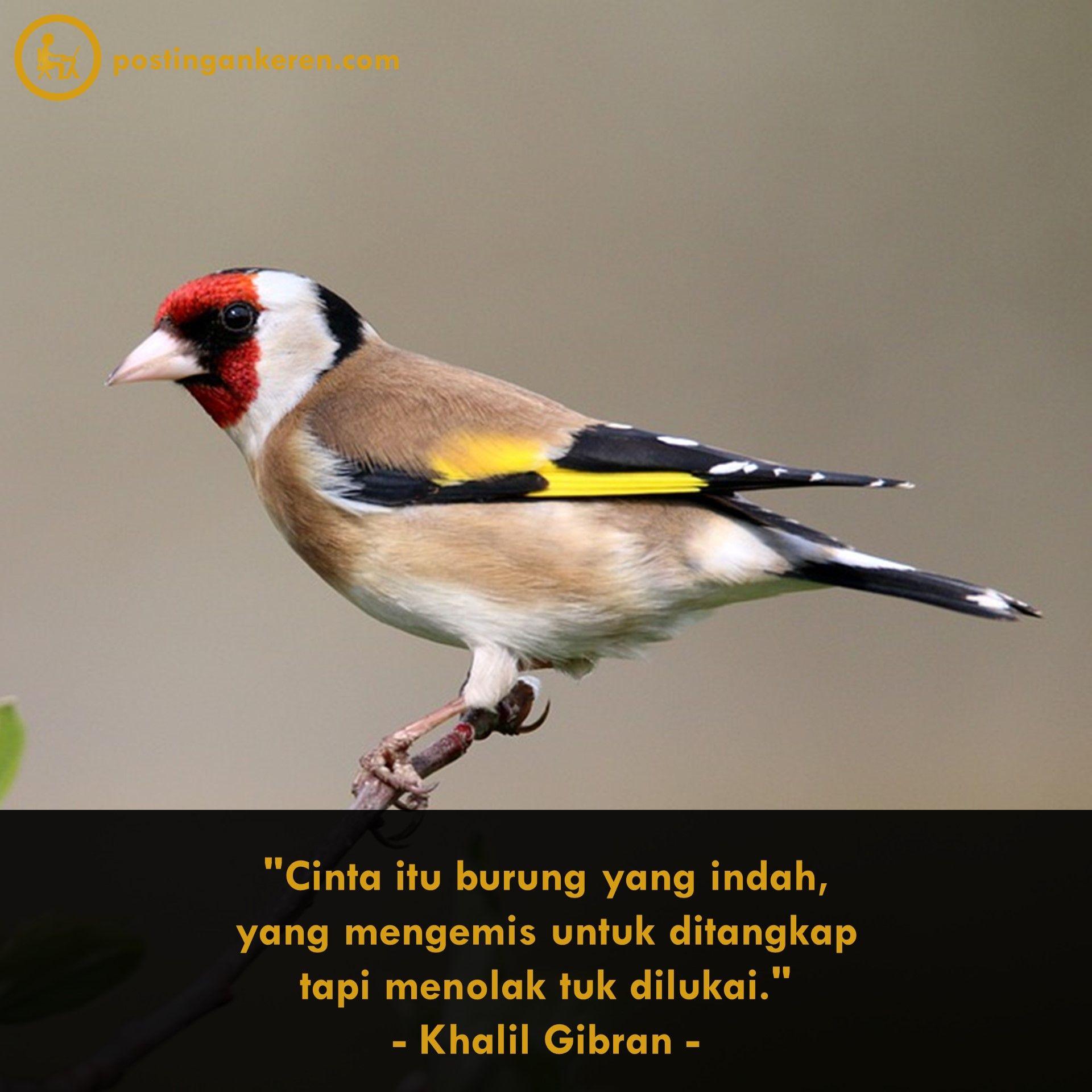 Cinta Itu Burung Yang Indah Yang Mengemis Untuk Ditangkap