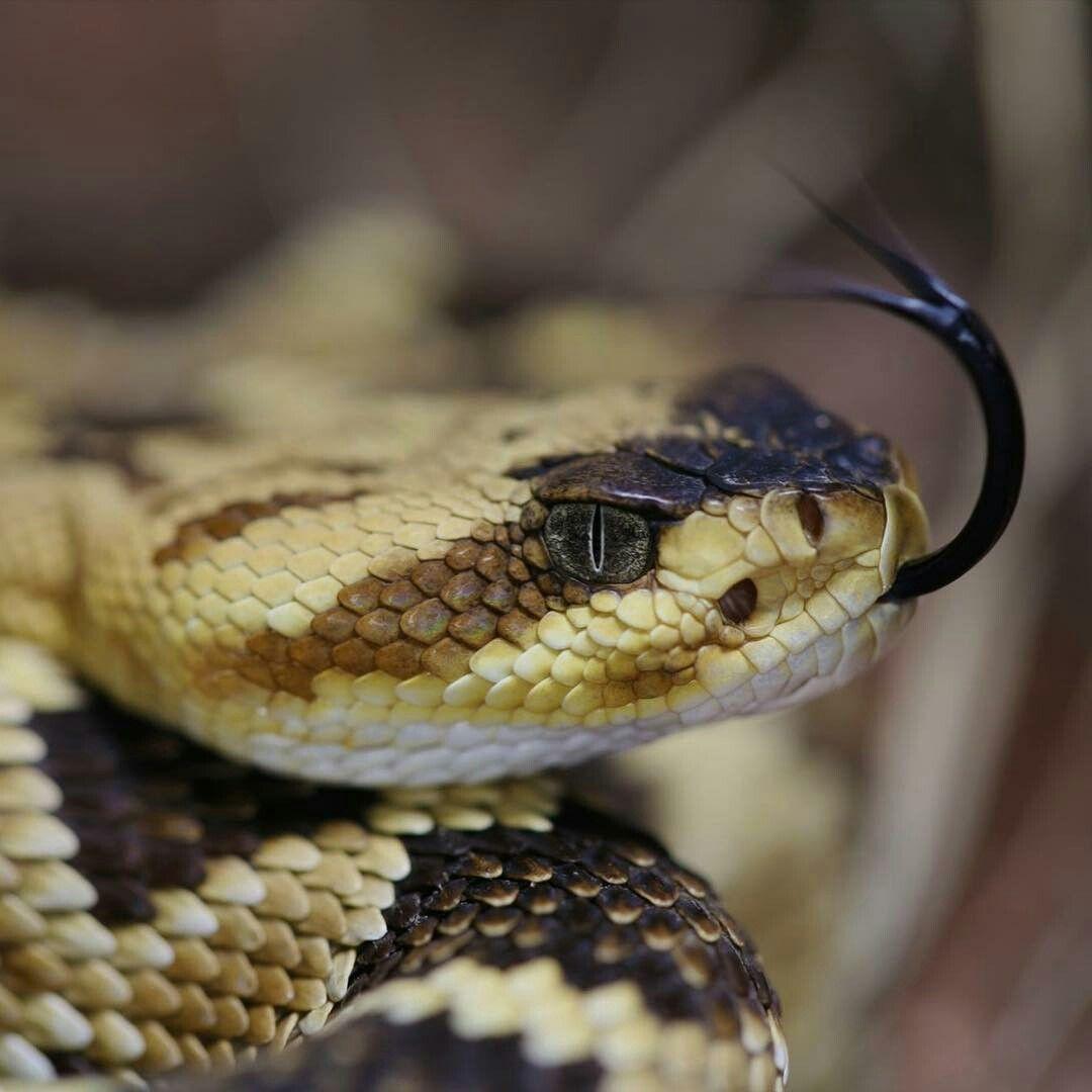 картинки рисунки фото змей словам