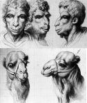 Fig 03. Charles le Brun. Camelo