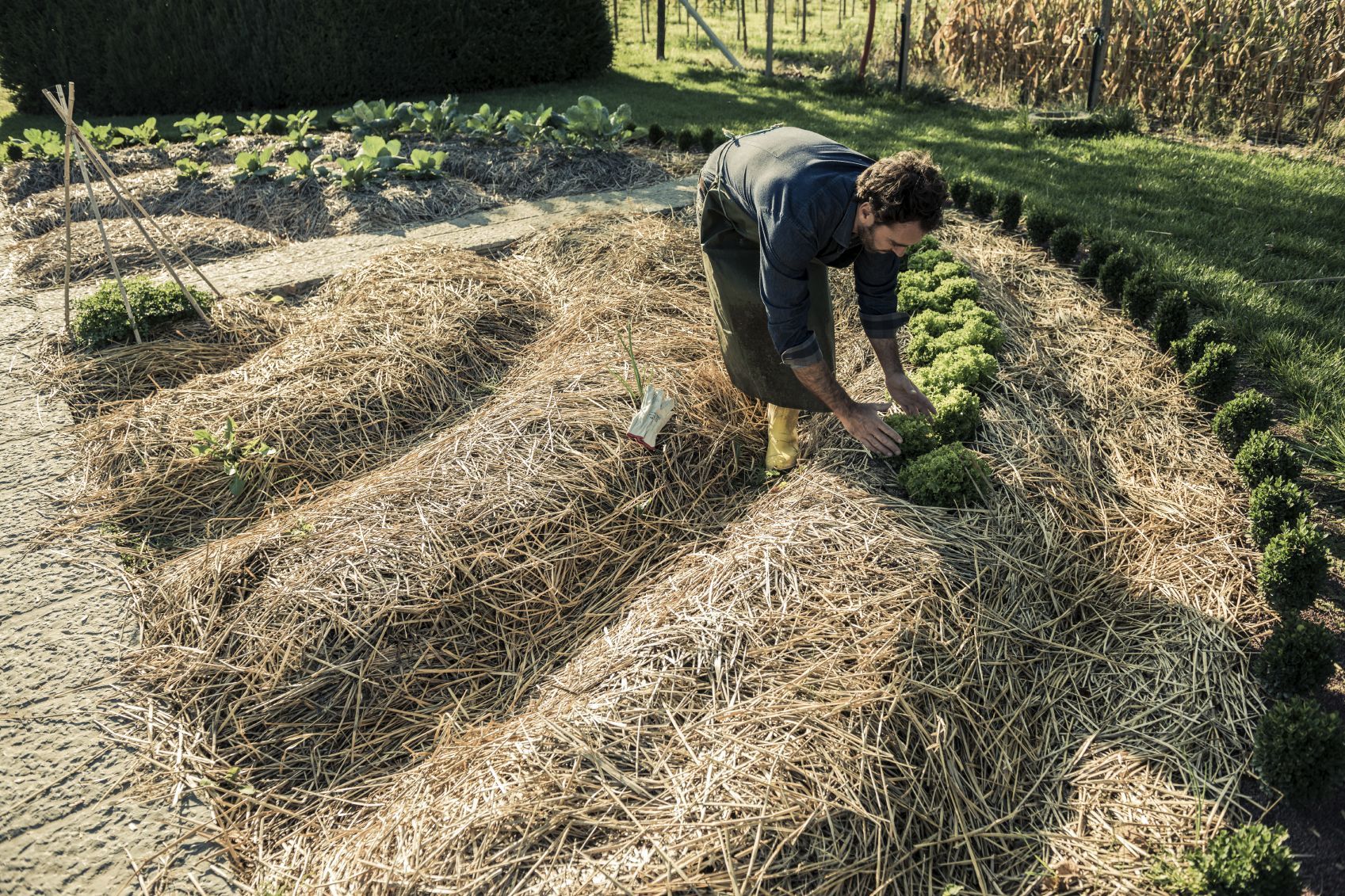 Mulching Veggie Beds – How And When To Add Mulch In Vegetable ...