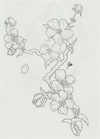 Cherry Blossom Sketches Flower Drawing Blossoms Art Cherry Blossom Painting
