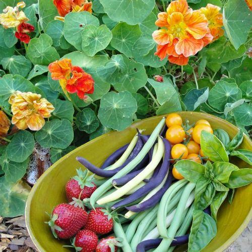 Planning The Ultimate Heirloom Garden Veggie Garden 400 x 300