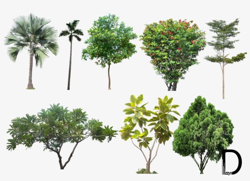 20 Tree Png Images For Architecture Landscape Interior High Resolution Trees Png Free Transparent Png Landscape Sketch Interior Rendering Trees Top View