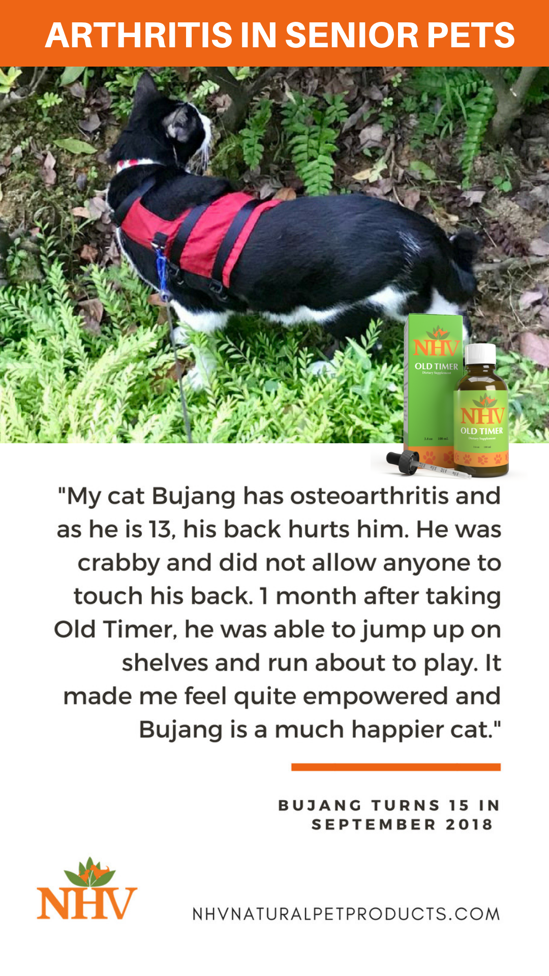 13 Year Old Cat Diagnosed With Osteoarthritis Is Jumping And
