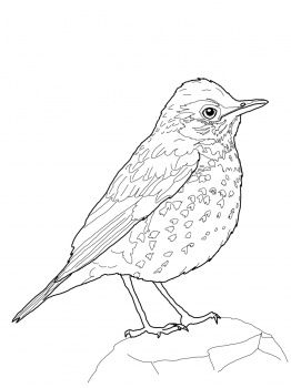 Wood Thrush Bird Coloring Pages Bird Coloring Pages