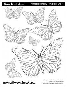 Printable Butterfly Template Sheet Butterflies Pinterest