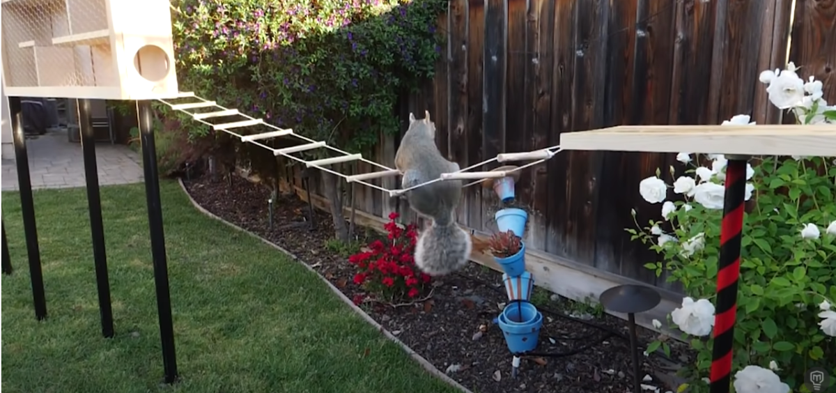Canada s top video of 2020 features an incredible squirrel proof bird feeder