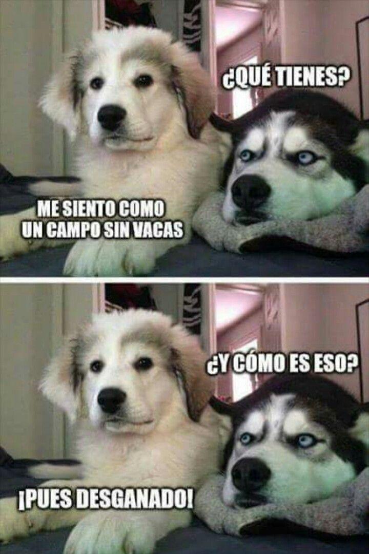 Pin De Daniel Mendoza En Cosas Random Memes Divertidos Sobre Perros Memes De Perros Chistosos Memes De Animales Divertidos