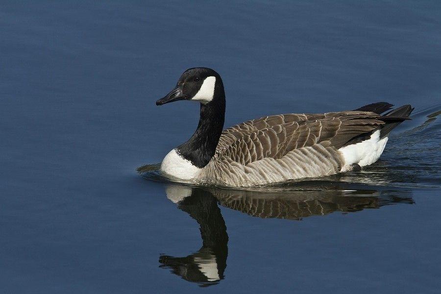 canada goose firenze